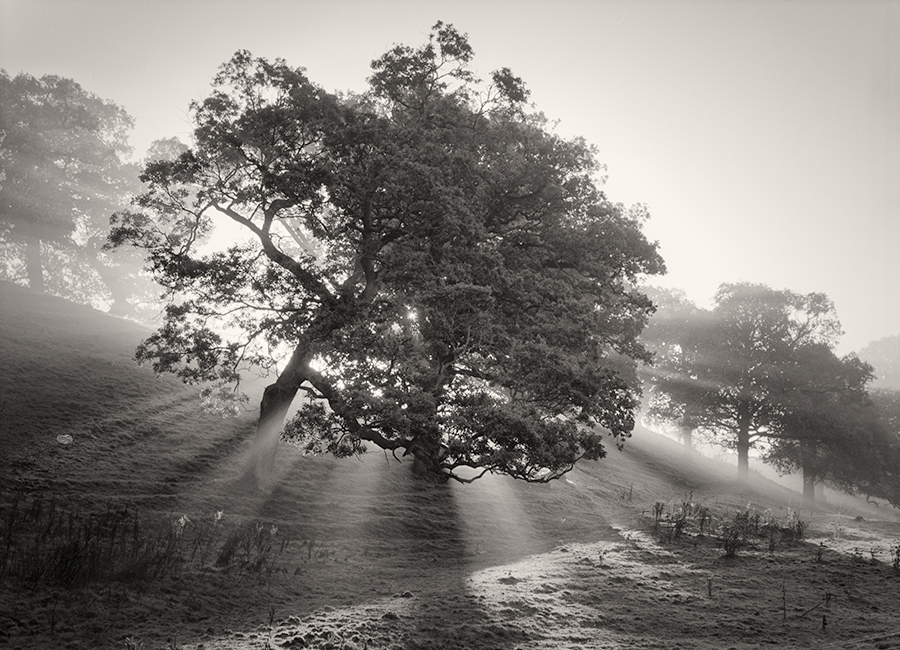 Martin henson fine art black and white photographer